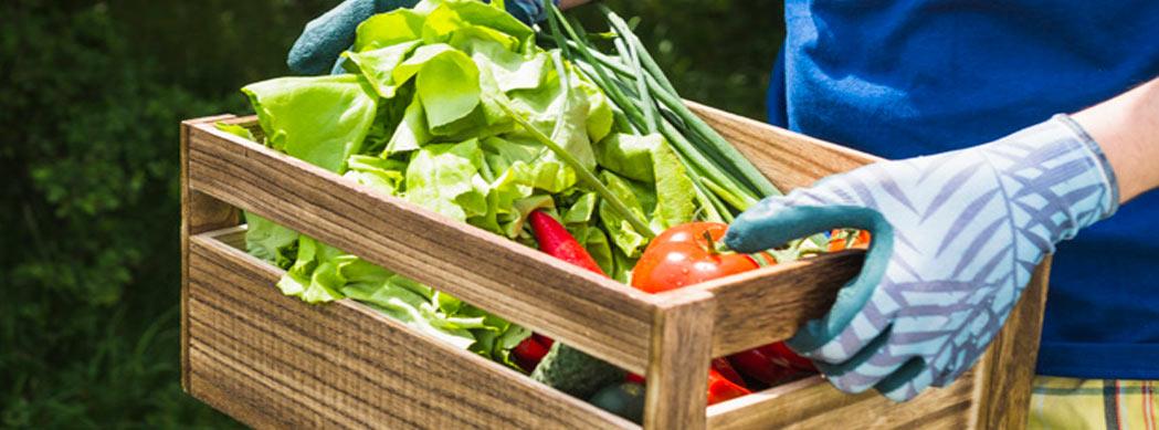 محصولات ارگانیک (organic products)
